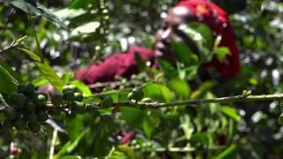 ကင်ညာက ကော်ဖီခြံရှင် အမျိုးသမီးများ