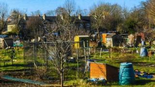 Allotments in Stevenage