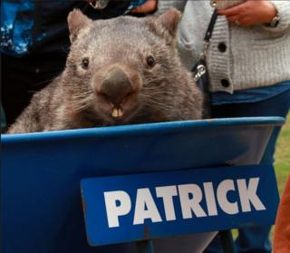 Screengrab of Facebook post by Patrick the Wombat