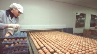 أرشيف فتاة تعالج البيض في أحد مصانع التعبئة