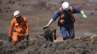 Chewbacca, cão da brigada de bombeiros de SC, ajuda a procurar vítimas do rompimento da barragem