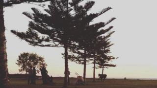 Cow at a coastal park