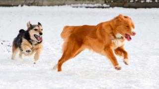 Luna and Tilly play in the snow