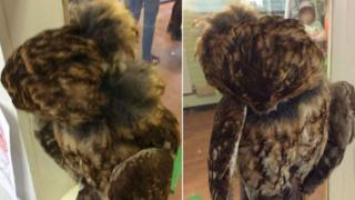 damaged stuffed owl