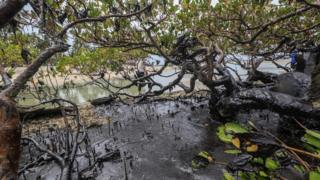 Oil spills pollute a mangrove on the beach of Carneiros in the state of Pernambuco