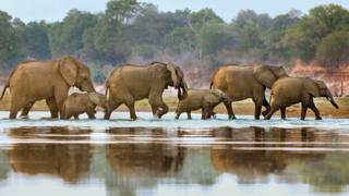 File photo of elephants