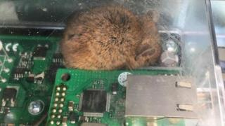 Mouse in the circuit box