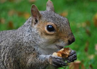 I took this picture of a squirrel eating a nut in the Botanics, Edinburgh