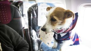 A dog with its flight ticket on a plane in Japan during a special event.