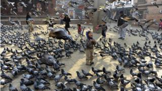 Crianças alimentam pombos em Kathmandu