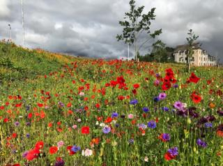 Wildflowers on the road through Port Elphinstone and Inverurie