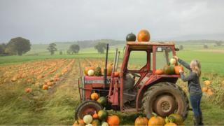 Rebecca McEwen working in her pumpkin patch