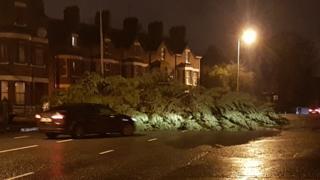 Tree down Malone Road