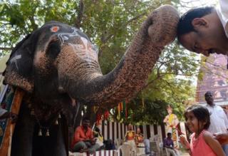 یک مرد هندی در حال تعظیم به یک فیل معبد در مراسمی مذهبی در چنای هند