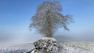 Snow and mist in a field