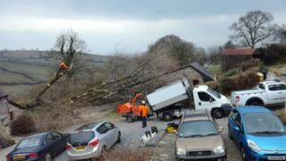 The black poplar tree was pulled from the ground during high winds as Storm Emma hit on Thursday