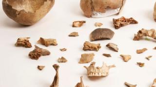 Huesos de la cueva de Gough