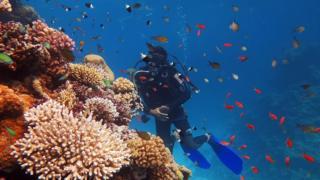 Scuba diving in Sharm el-Sheikh