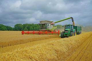 Harvest in a field