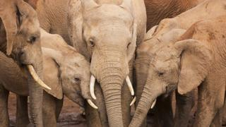 چرا نباید جلوی فیلها ادرار کرد