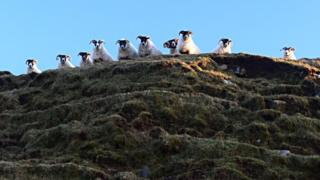 "Neil MacNeill looked up and saw this ""cheeky bunch"" watching him as he walked at Machir Bay on Islay"