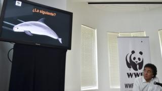 世界自然基金會墨西哥辦事處主管奧馬爾·維達爾(Omar Vidal)