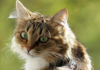 Marusia the cat