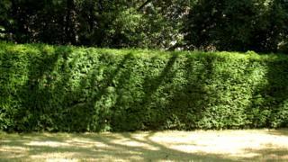 A hedge