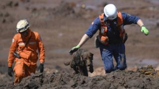 Chewbacca, que faz parte do Corpo de Bombeiros de Santa Catarina, um dos cães que estão atuando nas buscas em Brumadinho