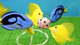 японські акваріумні рибки