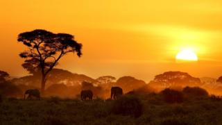Sun setting over Kenya with elephants