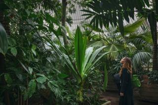 Dense undergrowth in a large tropical greenhouse with a woman looking at a plant