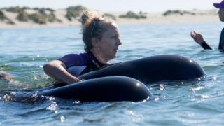 عمليات إنقاذ الحيتان الجانحة