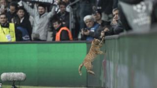 Cat ontop field for Turkey