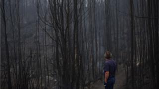 Выжженный лес в Испании