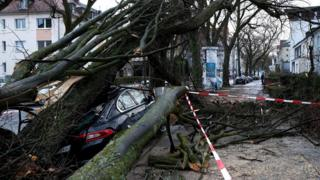 car crushed and surrounded by a fallen tree