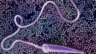 Сперматозоид морской звезды на яйцеклетке
