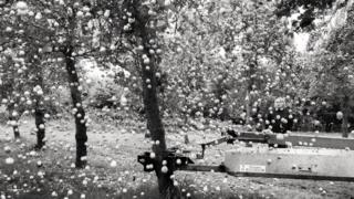 ایک مشین کے ذریعے سیب درخت سے اتارے جا رہے ہیں
