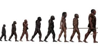 Stages in human evolution, illustration