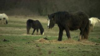 Abandoned horse in a filed in Hampshire