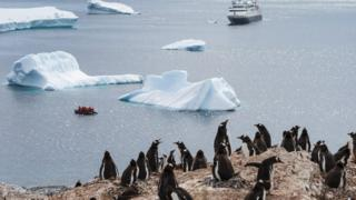 Nau'in agwagwa Penguins
