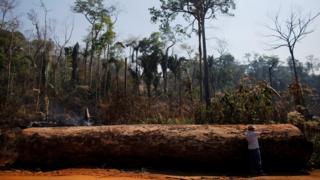 مردی به قطع غیرقانونی یک درخت تنومند در آمازون اشاره می کند - عکس از سال ۲۰۱۵