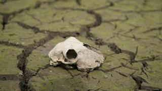 Animal skull on a dried up river bed