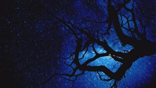 Noche estrellada con árbol en primer plano