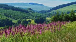 Foxgloves in the foreground and far-reaching countryside view beyond
