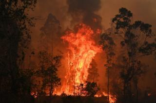 A huge, bright orange blaze erupts amid trees