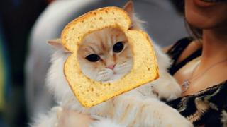 Cat with toast on its head