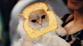 스냅챗을 통해 고양이에게 가상의 '빵 필터'를 적용할 수 있다