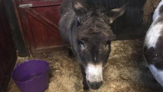 Bubbles the donkey
