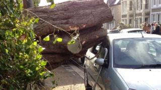 A tree falls onto a car in Truro